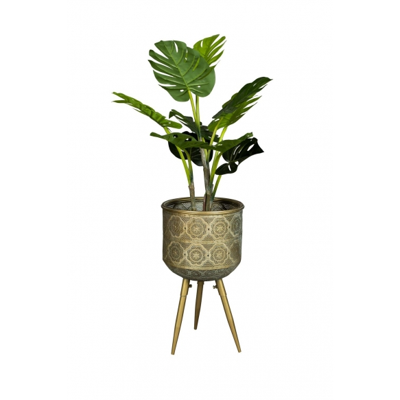 taimealus Botanique M