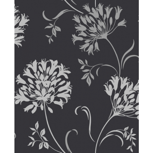 Accents Agapanthus Black